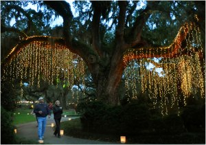 brookgreengardenslights